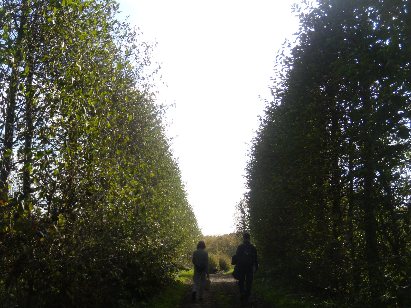 Through an orchard Sevenoaks Circular
