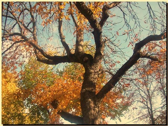 ...Colorful tree on my autumn-road...Őszi fa vigyázza léptem...