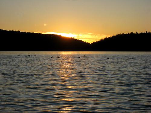 sunset lake reflection fall gold ducks norcal nevadacounty scottsflatlake cascadeshores