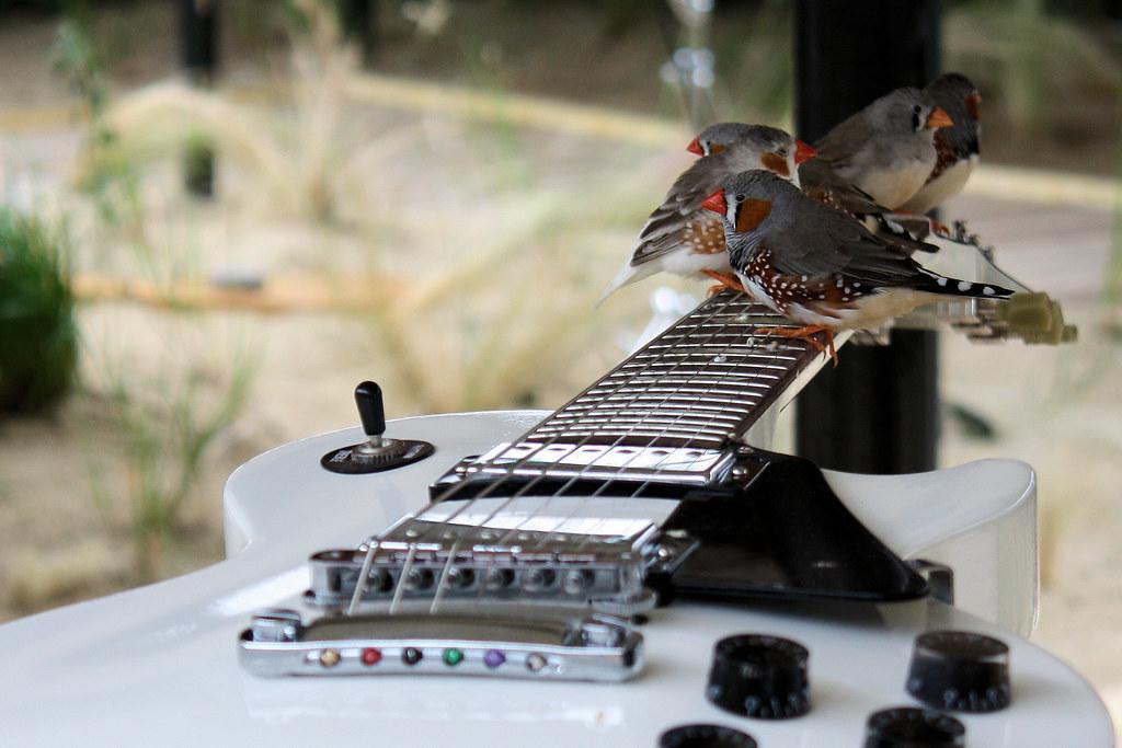 apprendre guitare 40 ans