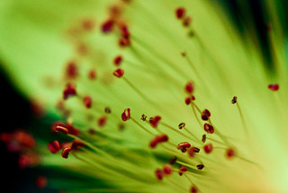 Tipped stamens | by jw312