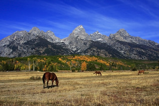 Color Landscape - Grand Tetons | by fortherock