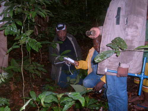 Wed, 12/31/2008 - 20:32 - Soil Sampling by Nsalambi Nkongolo (left) and research assistants.