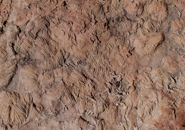 Alice Springs, Trilobite tracks