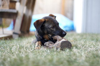 2009.09.11 -- Dog Log   by Matt Wiater