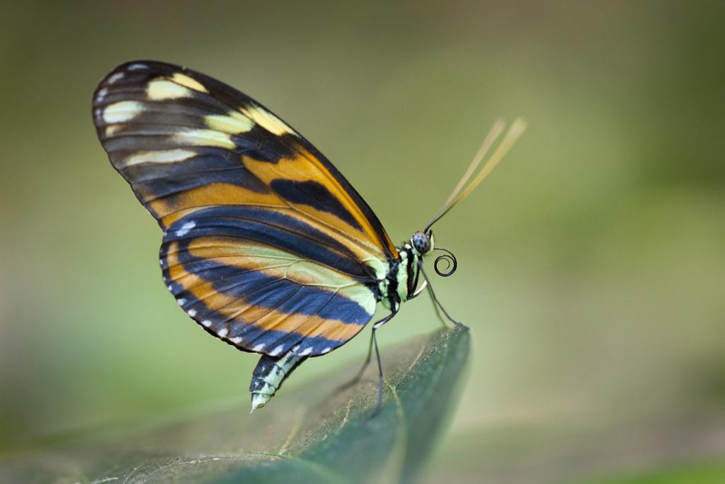 Butterfly Palace 5929