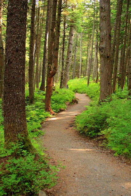Serene part of the Winner Creek Gorge trail