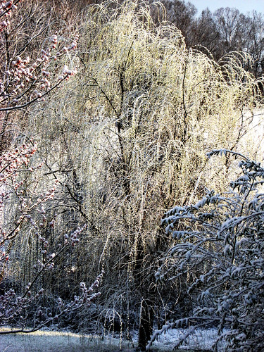 sunset snow tree willowtree