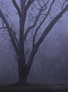 Violet Blanket of Fog