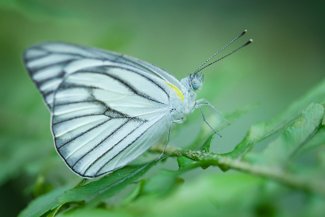 Butterfly Palace 5960