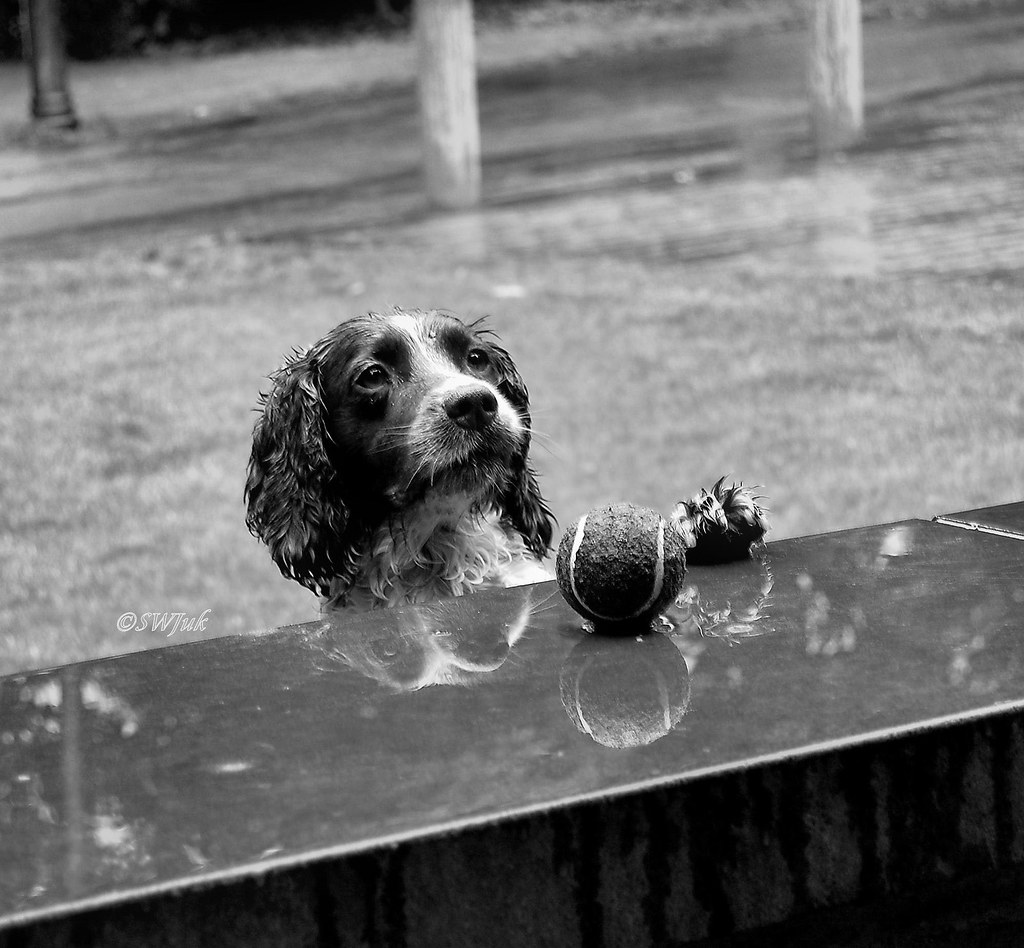 DSC_0079bw - Please Mister, can I have my ball back...? by SWJuk