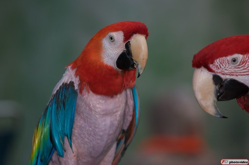 angry parrots marland