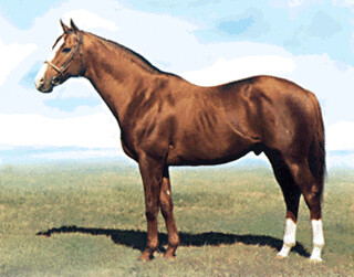 SHARPEN UP (GB) 1969. Chestnut Horse | TRACK RECORD Raced in… | Flickr