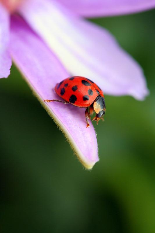 Ladybug Fly Away Home