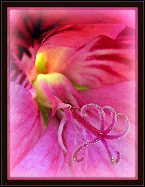 geranium . . .