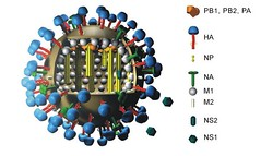 Influenza subtype A - for blog   by nikaboyce