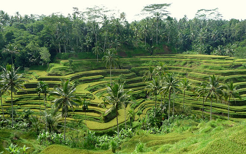 Ubud, Bali - terraced rice paddy 01 | by suanie