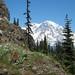 Mt. Rainier trip & High Rock Hike