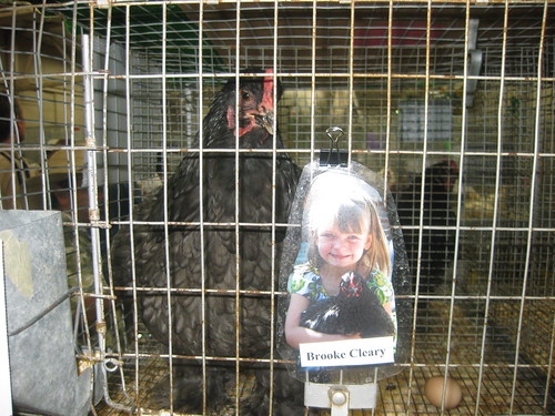 Brooke's prized chicken | by WHardcastle