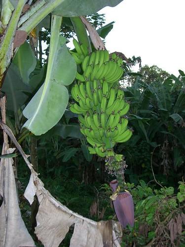 Papaya & Mango-Galapagos | by GaryAScott