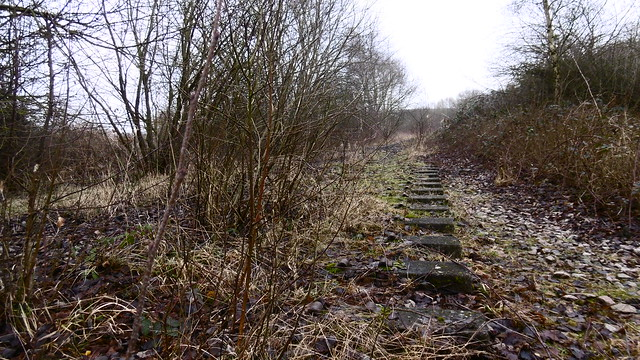 Trackbed & sleepers on Seymour Junction - Bolsover branch   (Staveley to Bolsover old railway)   February 2017