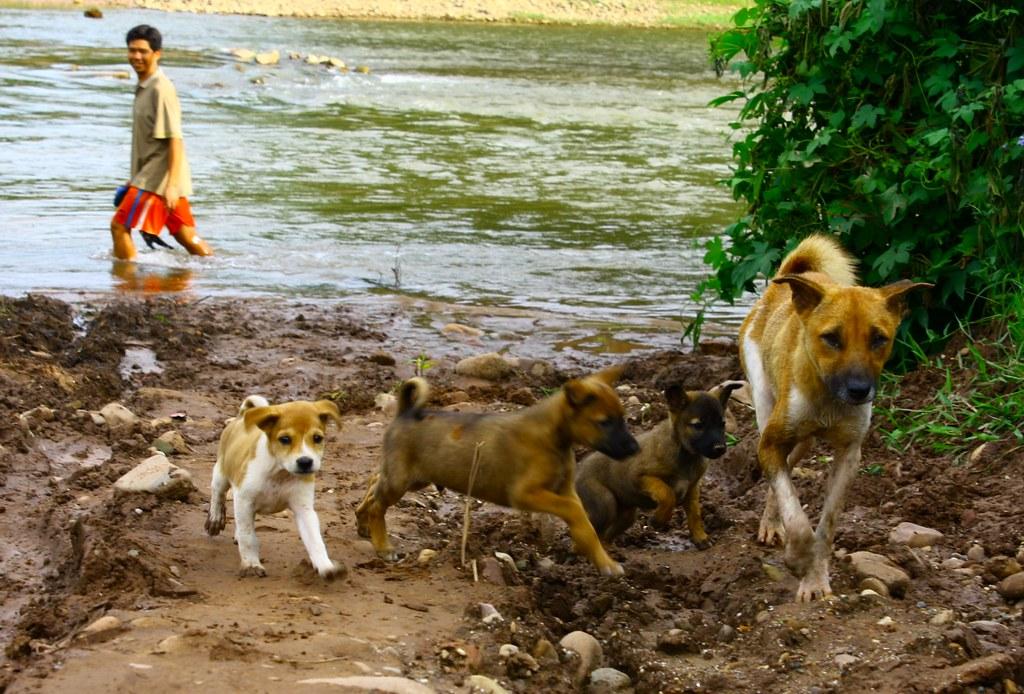 Luang Nam Tha, 04/08/2009