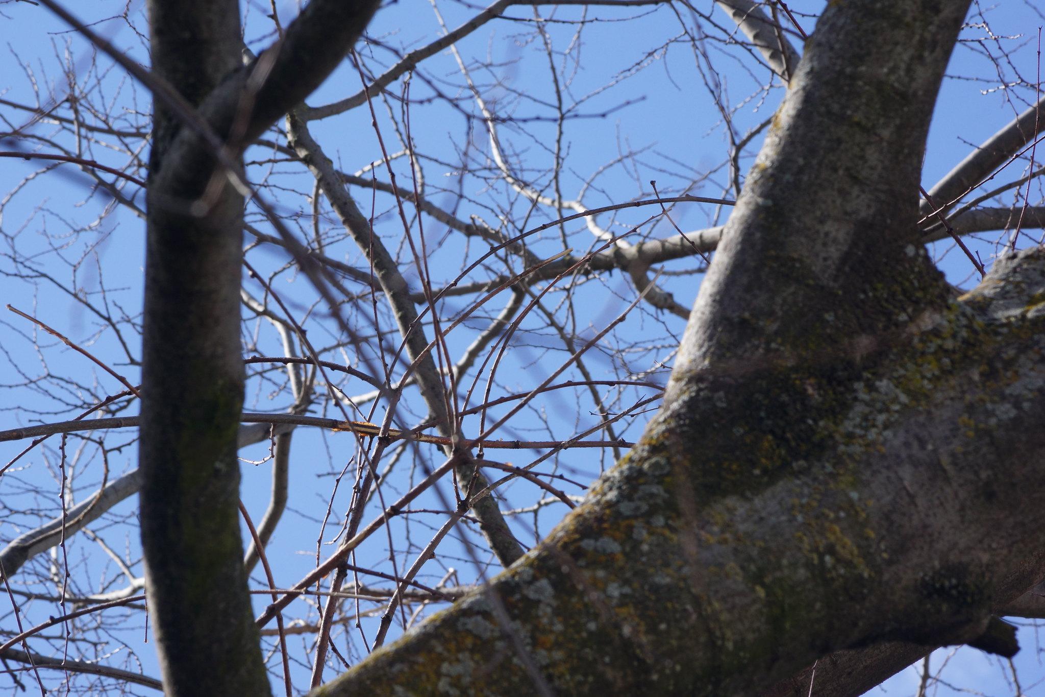 2017-02-16 Twigs Test - Take 5 [#4]