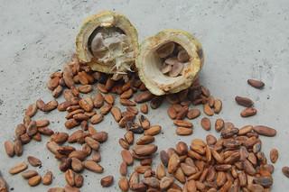 Cacao | by varresa