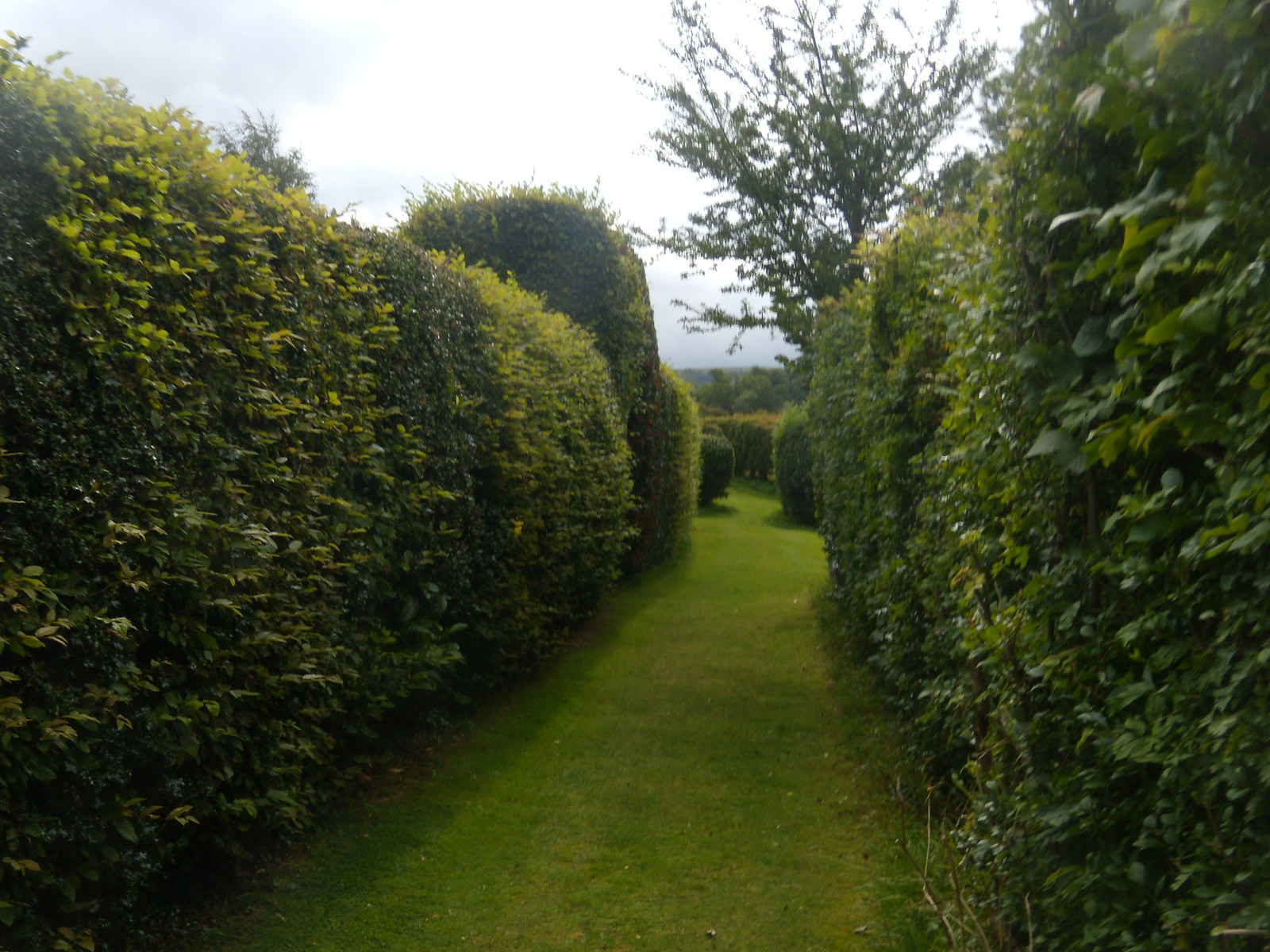 Manicured footpath Not many footpaths have their own lawn and neatly clipped hedges Hassocks to Brighton