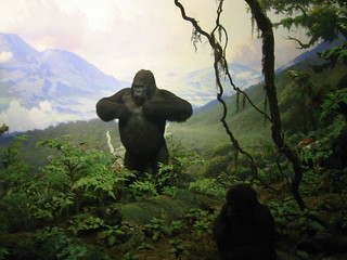 Mountain gorillas in Museum of Natural History | by WorldIslandInfo.com