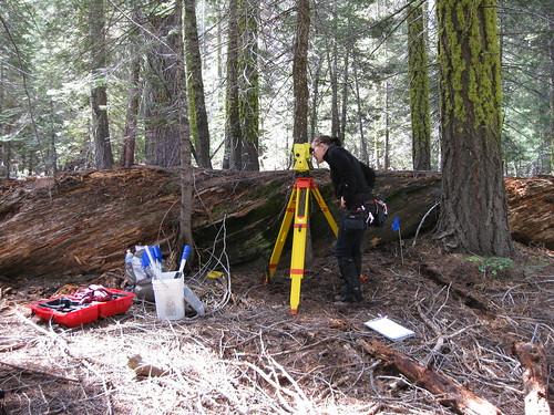 Mon, 06/15/2009 - 10:26 - University of Washington undergraduate Alana Lautensleger surveys over coarse woody debris.  Coarse woody debris (in this case Pinus lambertiana) can remain on the ground for more than a century. June 2009.  Credit: Jim Lutz