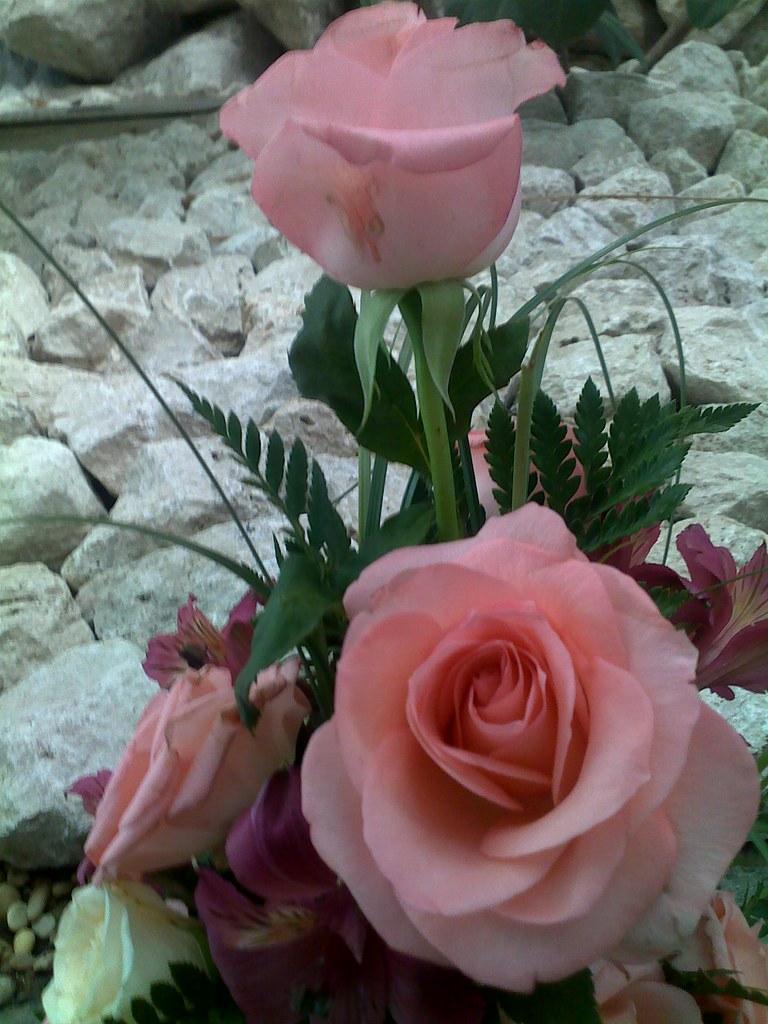 Top All sizes | Queste rose sono x TERESA GUZZI CON I MIEI AUGURI DI DS05