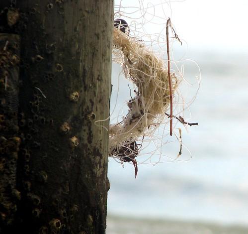 Bondage tangled fishing line
