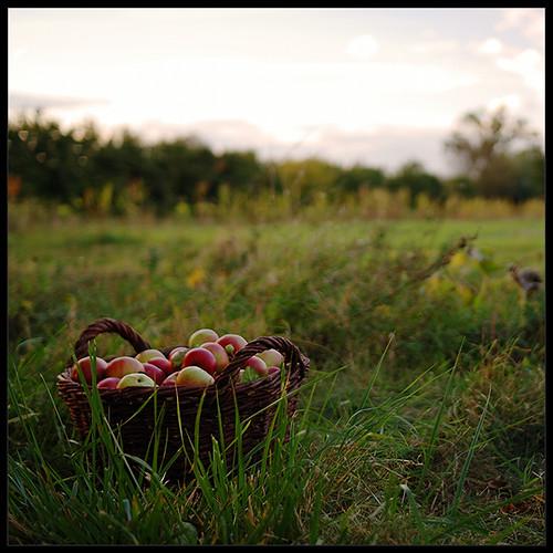 nikon sigma 30mmf14 d80 jablkovýsad očipotokspát