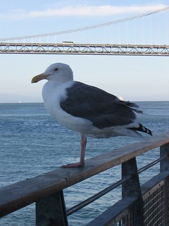 seagull | by nightrose