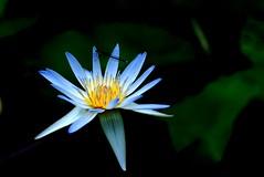 Lotus | by Teppei Shimokawa