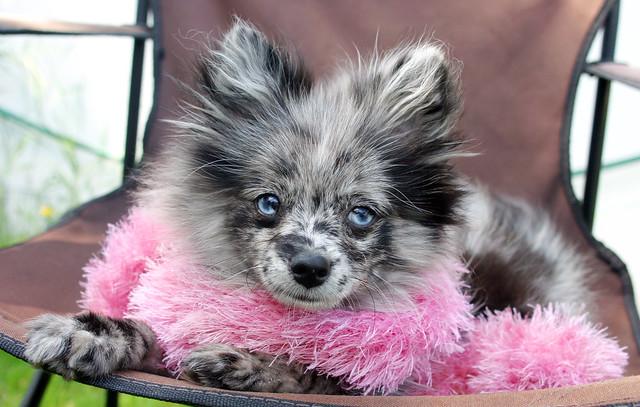 Diva puppy = CUTE!