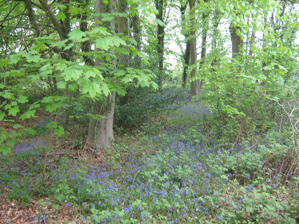 Bacton Woods, Norfolk