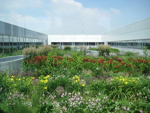 comer roof top garden   by vinzcha