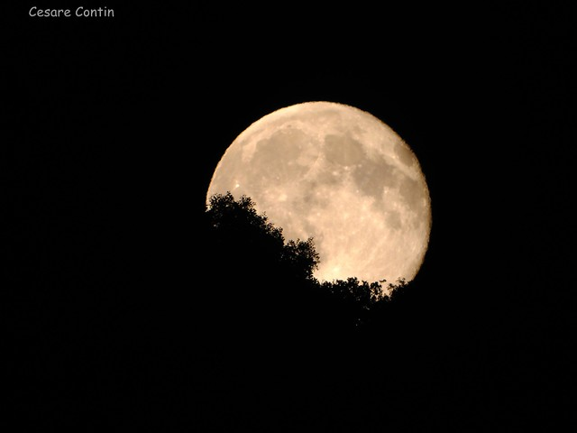 la signora luna