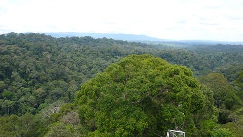 Thu, 03/13/2008 - 11:15 - View over the Kuala Belalong landscape. Credit: CTFS