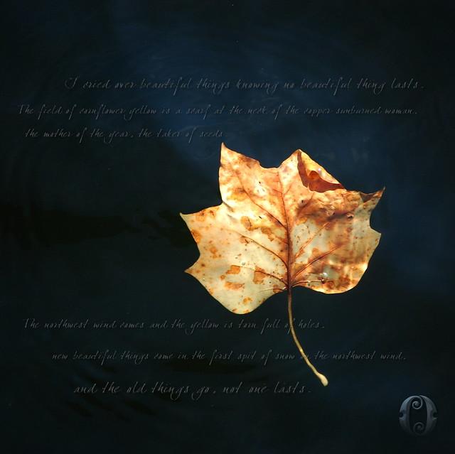 Autumn Movement