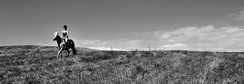 horse farm tennessee country pasture clarksville ifed f3545d 1835mm jamesatkinsonjamesatkinsond700