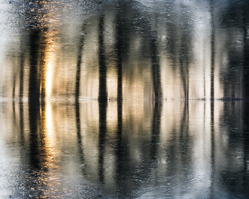 ice frozen water reflection lake silhouette simonandhiscamera shade sunlight sunrise sun abstract winter contrast distorted gardens lines landscape nature outdoor pattern waterfront woods weather syon syonpark syonhousepark syonhouse symmetry forest trees