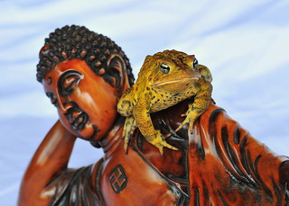 The Buddha and The Toad