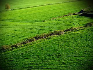 Green lands / Campos verdes | by Shaury