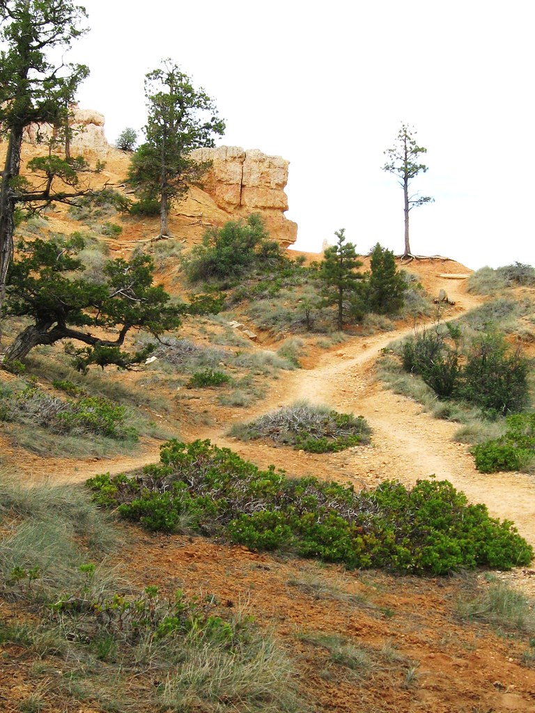 View from our tent at Bryce Canyon