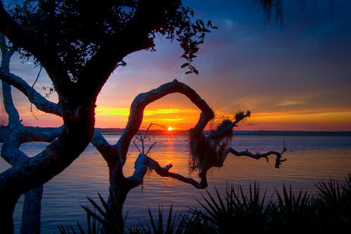 saintaugustine usina northbeachcampground d50 sunset tree vilano sun icw