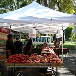 Greenmarket Shopping - it is Organic!