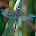 I spy a dragonfly... by Images by John 'K'
